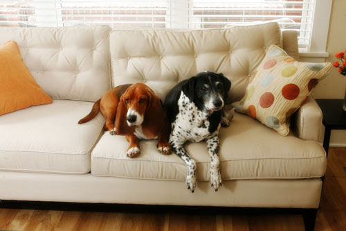 dogs on the sofa