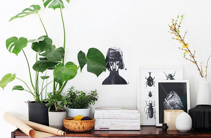 where-to-buy-indoor-plants-in-brisbane